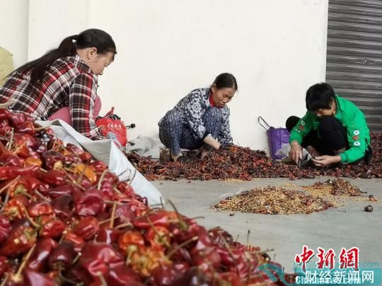 图为工人们在分拣辣椒。 胡琢琰 摄