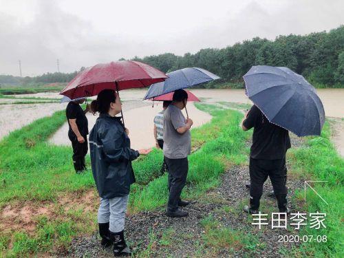 中国大地保险快速应对江西洪灾,助力受灾农户恢复生产